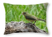 Painted Bunting - Feeding Female Throw Pillow