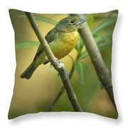 Painted Bunting Female Throw Pillow