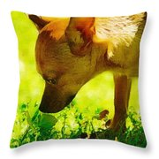 Painted Chihuahua  Throw Pillow
