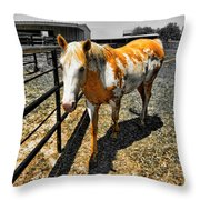 Painted Horse Throw Pillow