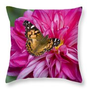 Painted Lady On Dahlia Throw Pillow