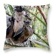Pair Of Boat Billed Night Herons Share A Joke Throw Pillow