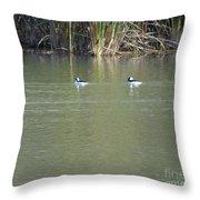 Pair Of Bufflehead Ducks  Throw Pillow
