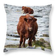 Pair Of Cows Grazing On The Burren In Ireland Throw Pillow