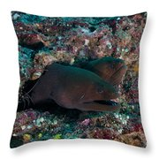 Pair Of Giant Moray Eels In Hole Throw Pillow