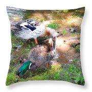 Pair Of Mallard Duck 4 Throw Pillow