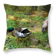 Pair Of Mallard Duck 6 Throw Pillow