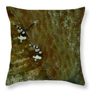 Pair Of Squat Anemone Shrimp Throw Pillow