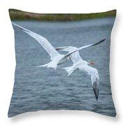 Pair Of Terns Throw Pillow