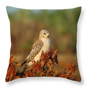 Pale Male Throw Pillow