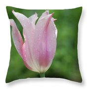 Pale Pink Tulip With Dew Drops Flowering Throw Pillow