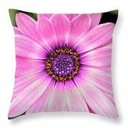 Pale Purple Flower Throw Pillow