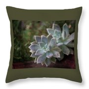 Pale Succulent On Artistic Background, Macro Throw Pillow