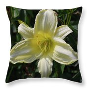 Pale Yellow Flowering Lily Blossom In A Garden Throw Pillow