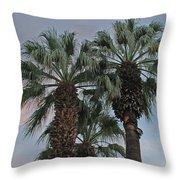 Palm Desert Palms  Throw Pillow