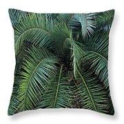 Palm Fronds Throw Pillow