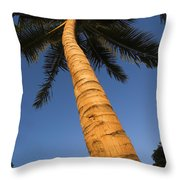 Palm In Blue Sky Throw Pillow