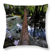 Palm Over Spring Throw Pillow