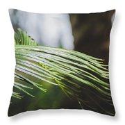 Palm Tree 5 Throw Pillow