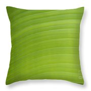 Palm Tree Leaf, Seychelles Throw Pillow