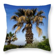 Palm Trees Growing Along The Beach Throw Pillow
