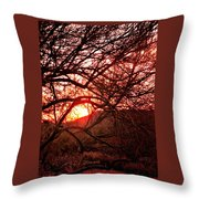 Palo Verde Sunset Throw Pillow