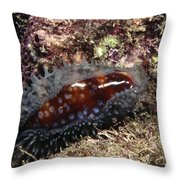 Panamic Deer Cowrie, Cypraea Cervinetta Throw Pillow