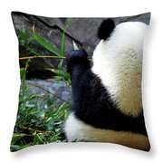 Panda Bear Eating Bamboo Throw Pillow
