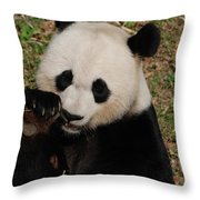 Panda Bear Eating Some Shoots Of Bamboo Throw Pillow