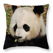 Panda Bear Eating Some Yummy Bamboo Shoots Throw Pillow