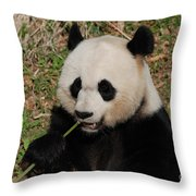 Panda Bear Holding On To Bamboo While Eating  Throw Pillow
