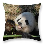 Panda Bear Laying On His Back And Eating Bamboo Throw Pillow