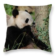 Panda Bear Smelling His Bamboo Before Eating It Throw Pillow