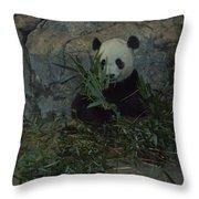 Panda Lunch Throw Pillow
