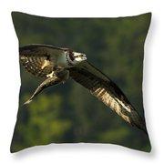 Pandion Haliaetus Throw Pillow