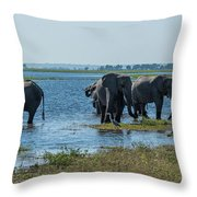 Panorama Of Elephant Herd Drinking From River Throw Pillow