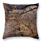 Panorama Of Forest Of Sakura Japanese Flowering Cherry Trees Wit Throw Pillow