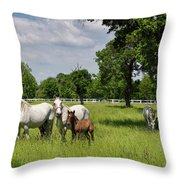 Panorama Of White Lipizzaner Mare Horses With Dark Foals Grazing Throw Pillow