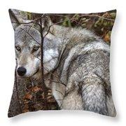 Panoramic Gray Wolf Yukon Throw Pillow