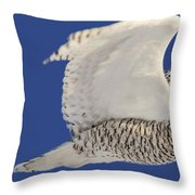 Panoramic Prairie Snowy Owl  Throw Pillow