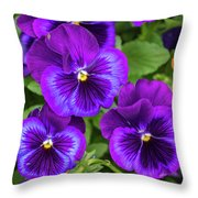 Pansies In Purple And Blue Throw Pillow