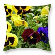 Pansies Of A Different Color Throw Pillow
