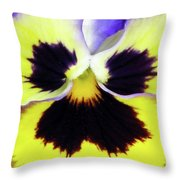 Pansy 09 - Thoughts Of You Throw Pillow