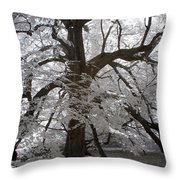 Paper Mulberry In Infrared Throw Pillow
