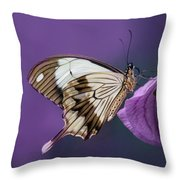 Papilio Dardanus On Violet Flowers Throw Pillow