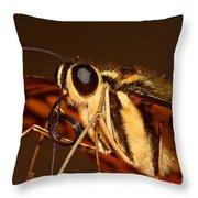 Papilio Demoleus Throw Pillow