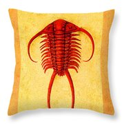 Paraceraurus Fossil Trilobite Throw Pillow
