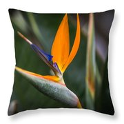 Paradise Song Throw Pillow