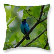 Paradise Tanager Throw Pillow