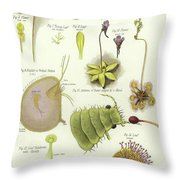 Parasites And Insectivorous Plants Throw Pillow